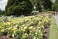Queen Mary's Garden IMG 4420.jpg