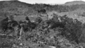 Queensland State Archives 365 Looking towards Maleny Mount Mellum and Bribie Island c 1931.png