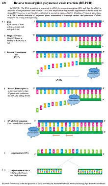Reverse Transcription Polymerase Chain Reaction Wikipedia