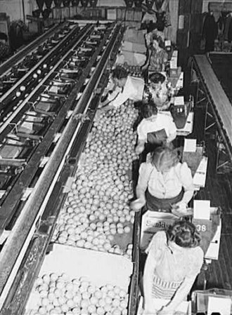 Redlands, California - Women packing oranges at the Sunkist packing plant, Redlands, California, 1943