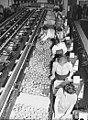 Redlands, California. Packing oranges at a cooperative packing plant..jpg