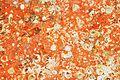 Restes de coquillages et d'algues sur un voile de quille (1).JPG