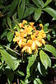 Rhododendronpark Bremen 20090513 260.JPG