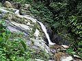 Riachuelos y cascadas en el Henri Pittier.jpg
