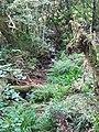 Ribeira do río Eifonso.jpg