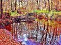 Rivière la Madeleine dans le grand bois.jpg