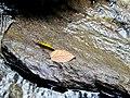 Roaring Fork Falls Black Mountain Campground Pisgah Nat Forest NC 4359 (24096565558).jpg