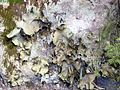 Rock-Fungi ForestWander.JPG