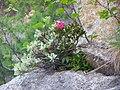 Rododendro - panoramio.jpg
