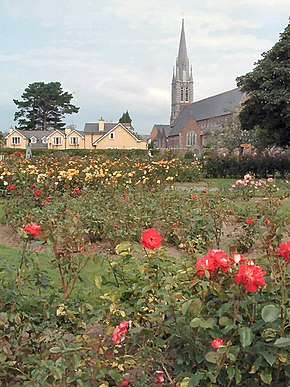 Roses of Tralee - geograph.org.uk - 125161.jpg