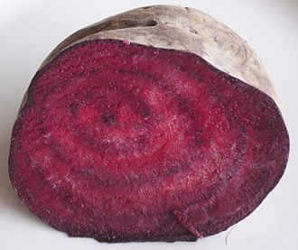 Beetroot - Section through taproot