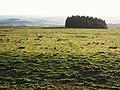 Rough pastures west of Carrawbrough Farm - geograph.org.uk - 1108130.jpg