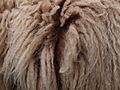 Roux du Valais Wool.jpg