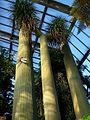 Royal Gardens at Kew (5341894232).jpg