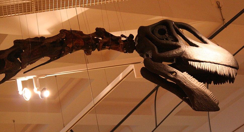 Rutland Cetiosaurus