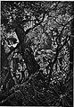Salgari - L'Uomo di fuoco (page 215 crop).jpg
