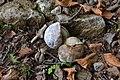 Salita dal Vò di Moncodeno al Monte Croce a Esino Lario 04.jpg