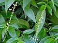 San Juan Botanical Garden - DSC07099.JPG