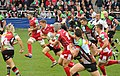 Scarlets breaking through (10243118463).jpg