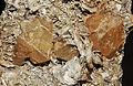 Scheelite sur muscovite (Chine) 1.JPG