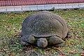 Schildkröte (Bernhard Bührer) jm88157.jpg