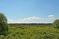 Schleswig-Holstein, Naturschutzgebiet Herrenmoor bei Kleve NIK 5745.JPG