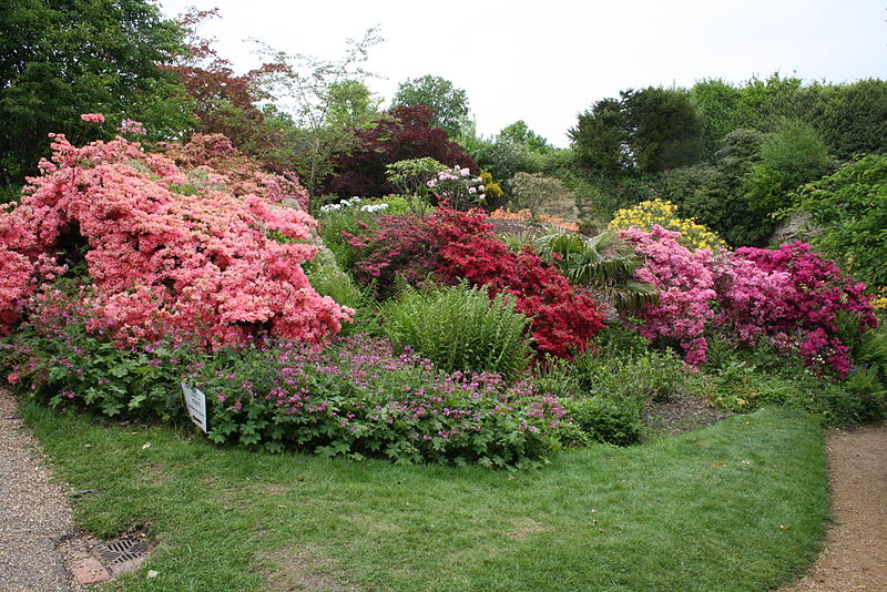 garden, scotney castle