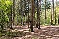 Scoutcentrum Buitenzorg Baarn - panoramio (7).jpg