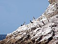 Seabirds on Islas Marietas.jpg