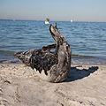 Seal 1 (6215102720).jpg