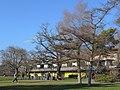 Seebad Tiefenbrunnen 2014-02-20 15-55-38 (P7800).JPG
