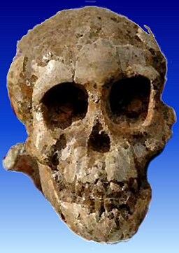SelamAustralopithecus