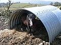 Shelter, Cwrt-y-Llyn - geograph.org.uk - 768156.jpg