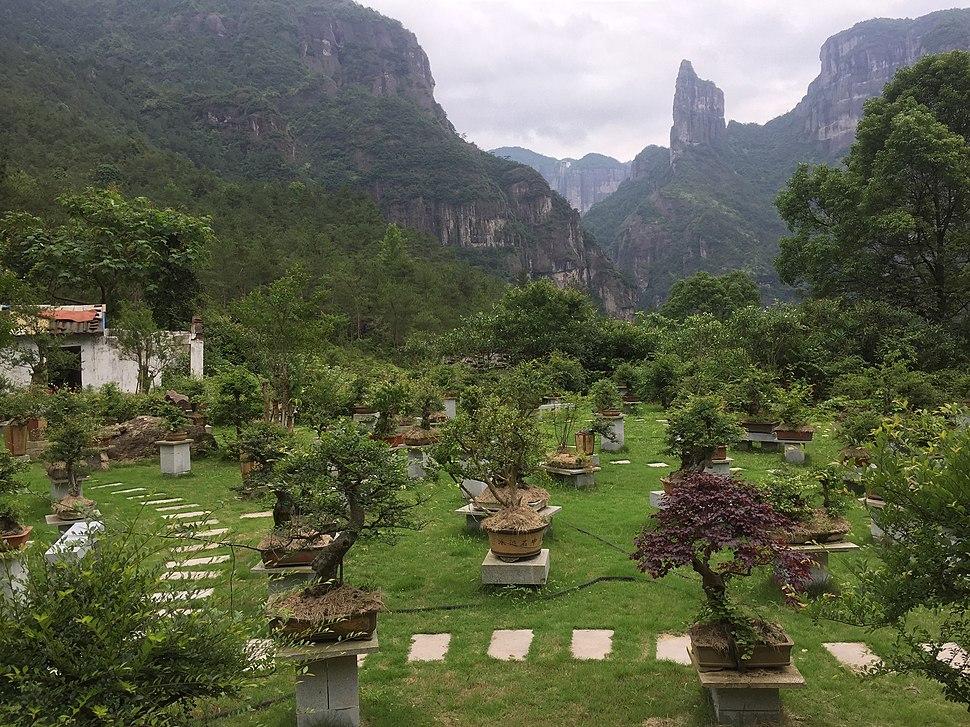 Bonsai garden just outside the Shenxianju geologic area.