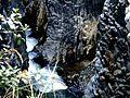 Shining water.jpg