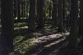 Shinrin yoku (Skogsbad).jpg
