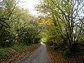 Shute's Lane, near Gillingham, Dorset.jpg