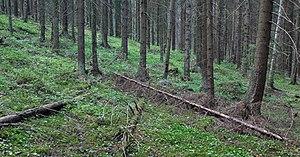 Sipoonkorpi National Park - Image: Sipoonkorpi