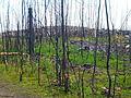Skogsbranden i Västmanland 2 aug 2015a.jpg