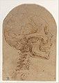 Skull in Profile MET DP257032.jpg