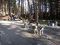 Sled Dog Discovery & Musher's Camp.jpg