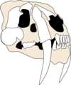 Smilodon skull w.png