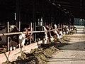 Smilovy Hory, kravín, 01.jpg