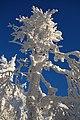 Sninský kameň (v zime) 041.jpg