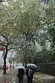 Snowstorm on Fifth Avenue, New York City, October 2011 (6335686244).jpg