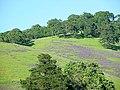Solano-hillside 011.jpg