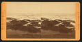 South Farallon Island, Sea Lions in Main Top Bay, by Muybridge, Eadweard, 1830-1904.png