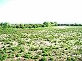 Sparse vegetation - geograph.org.uk - 451917.jpg