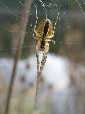 Description de l'image Spider 071003.jpg.