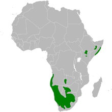 Spizocorys distribution map.png